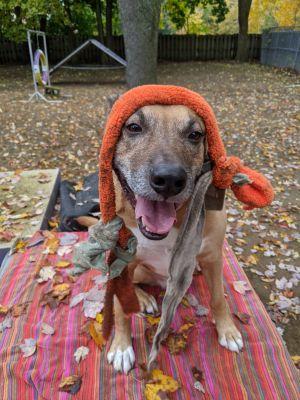 Wally Shepherd Dog