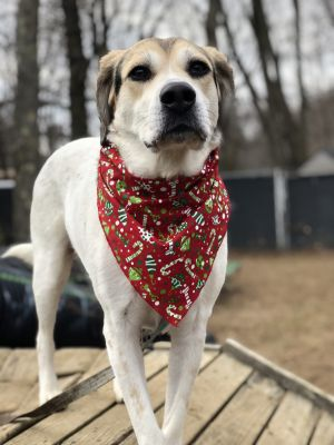 April Hound Dog
