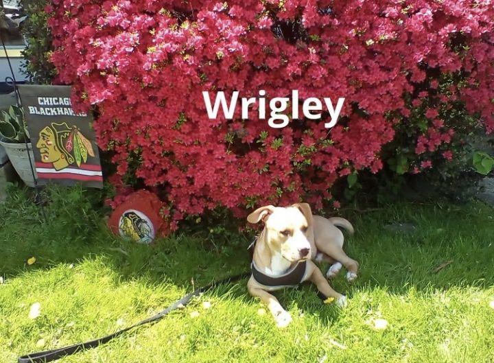 Meet Rockstar Wrigley! 5