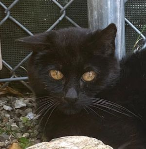 Say hello to Sooty This beautiful 9-year-old boy came from a hoarding home and took his time gettin