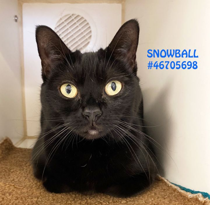 Snowball 1