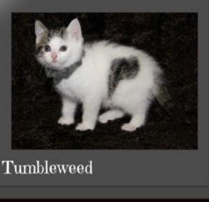 Sophia & Tumbleweed (BONDED PAIR)