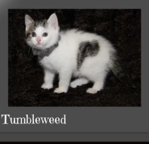 Sophia & Tumbleweed (BONDED PAIR) 1
