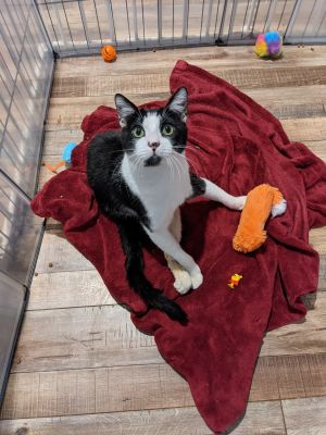 COURTESY POSTING Name Toby Approx Age 1 year Hi Im Toby I was rescued from the streets as a b