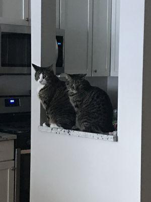 Dottie & Noodles (Bonded Pair) - Pending Adoption