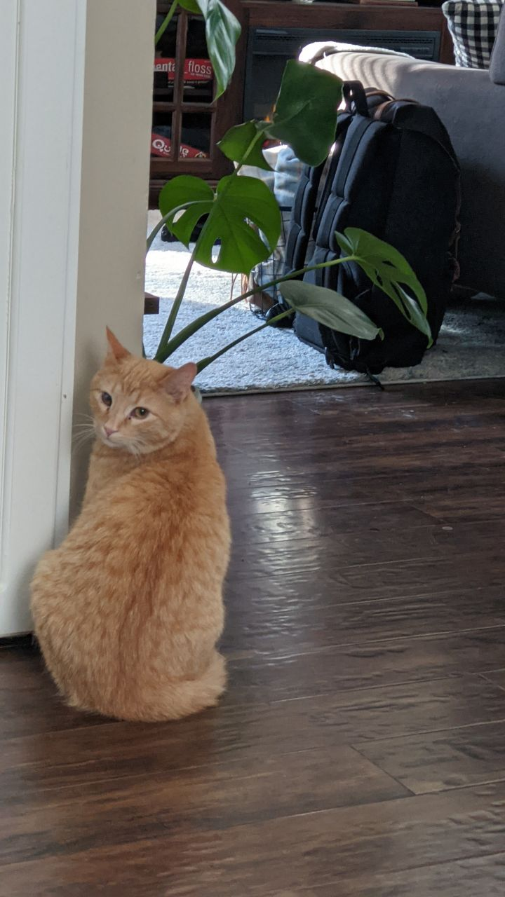 Cream - Not Currently Accepting New Applications (Waitlist Only) 6