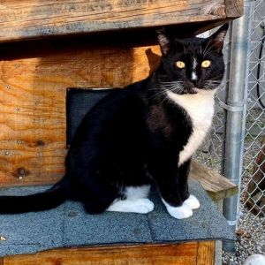 This dapper fellow is Mr Puss in Boots and he is our June Cat of the Month If you adopt