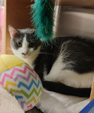 Sweet and loving girl Shy at first Lost her home when owner had to have major surgery Please help