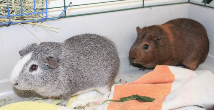 Blue Boy and Brownie 4