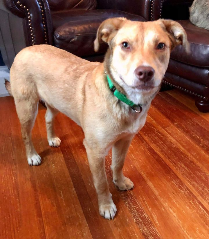 Brownie, an adopted Mixed Breed in Cape Girardeau, MO