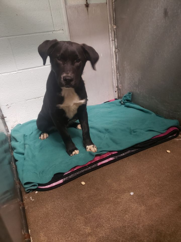 Mason, an adopted Mixed Breed in Cape Girardeau, MO