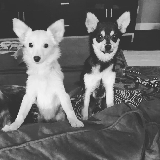 Scout and Ranger 1