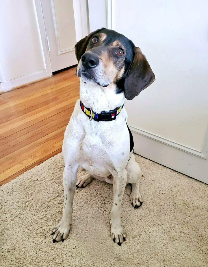 Tucker (your best friend!) 2