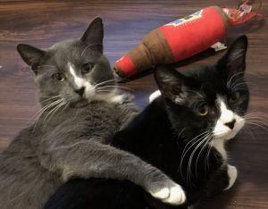 Greyson & Boo