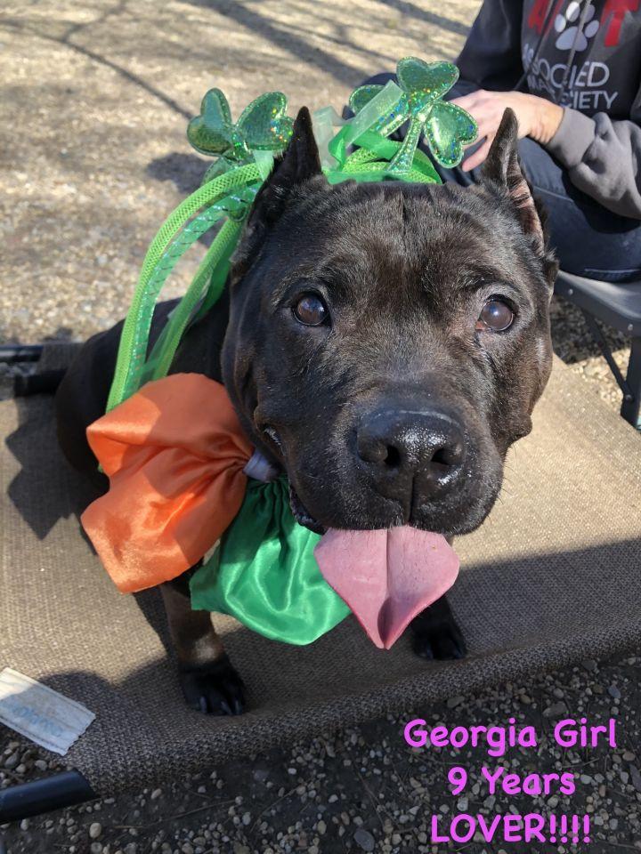 Georgie Girl 4