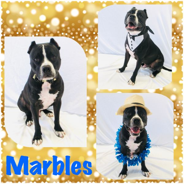 Marbles - Pawsitive Direction Program