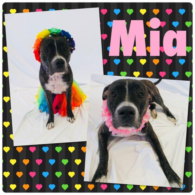 Mia - Pawsitive Direction Program
