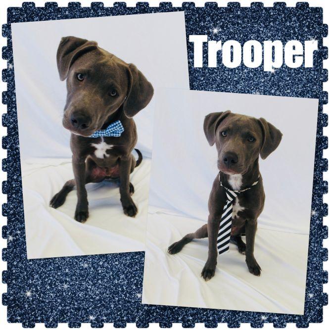 Trooper - Pawsitive Direction Program