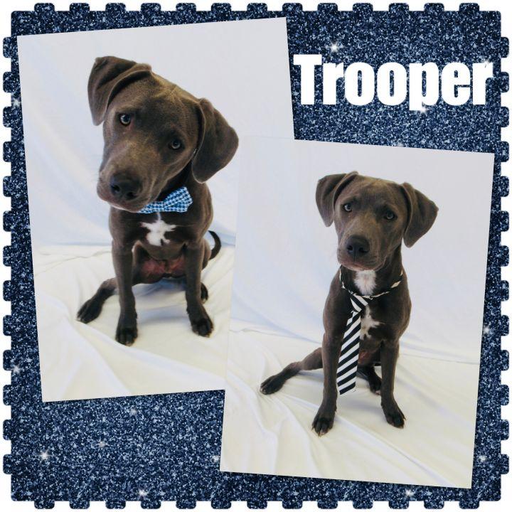 Trooper - Pawsitive Direction Program 1