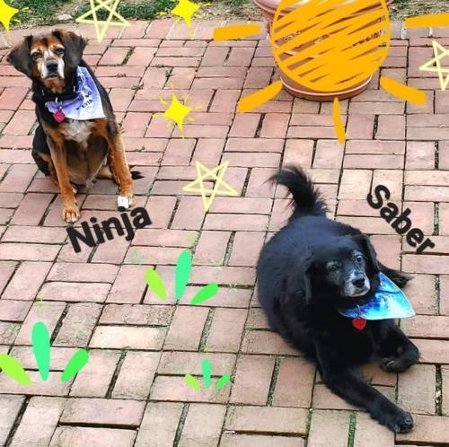 Ninja and his brother Saber 1