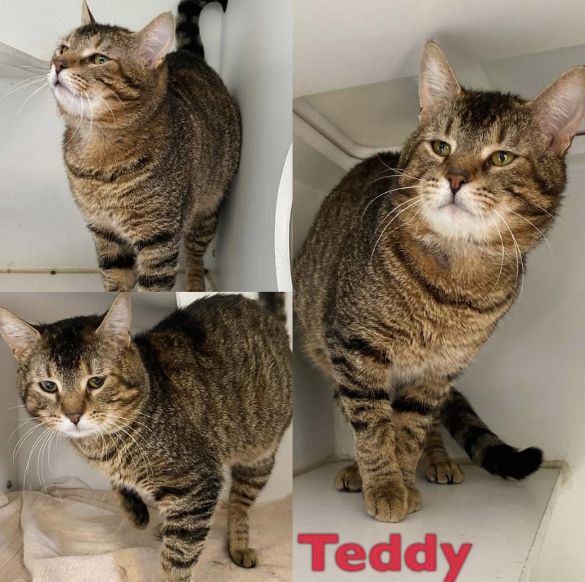 Teddy detail page
