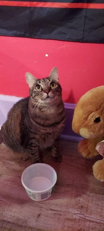 Olivia (Little Bear)
