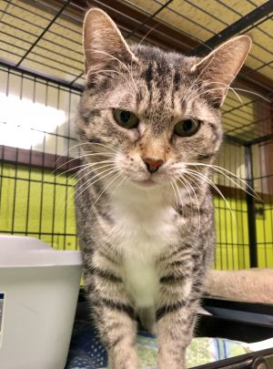 Every cat volunteer at the shelter knows and loves this little 6 year old tabby girl who has nothin