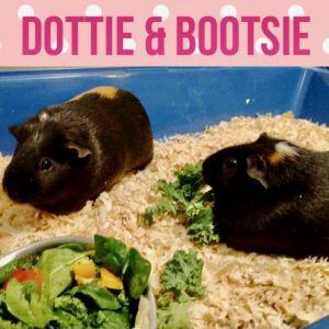 Bootsie and Dottie