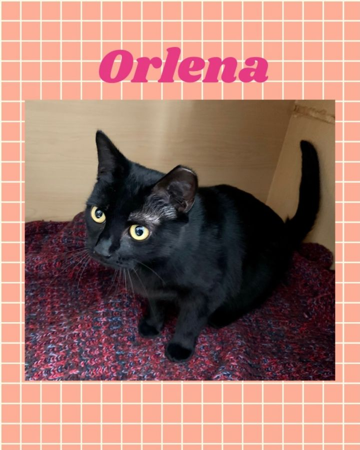 Orlena 1