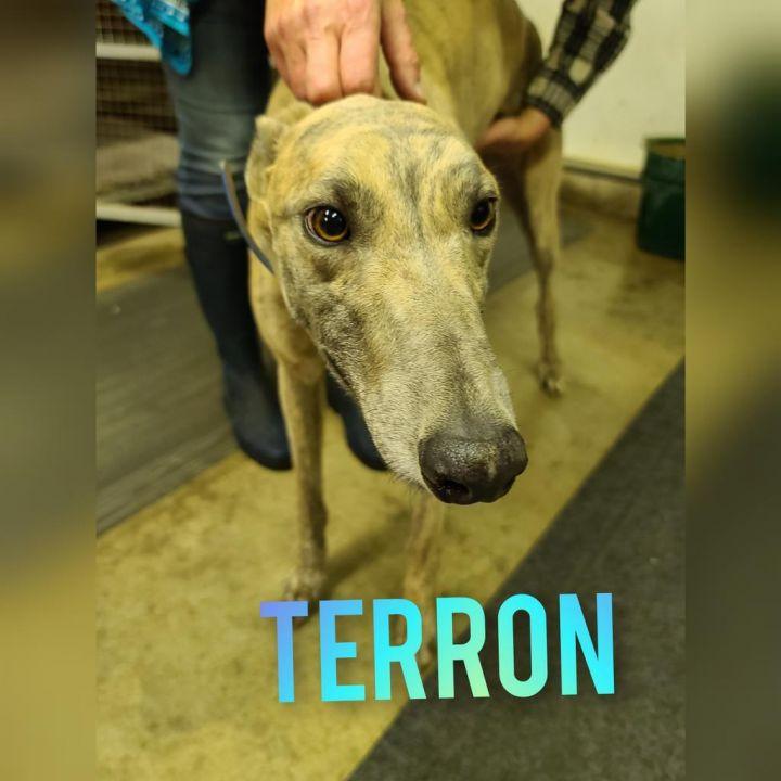 Terron 1