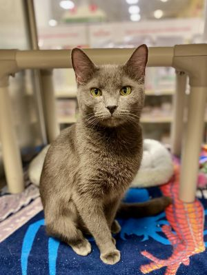 What a sweetie pie Sarah is approximately two years old and an absolute doll This petite girl has