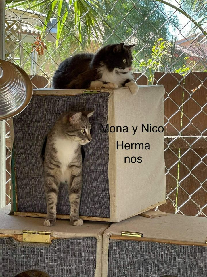 Mona and Nico 1