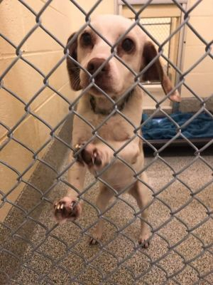 Goldie (bonded to  Buttons)