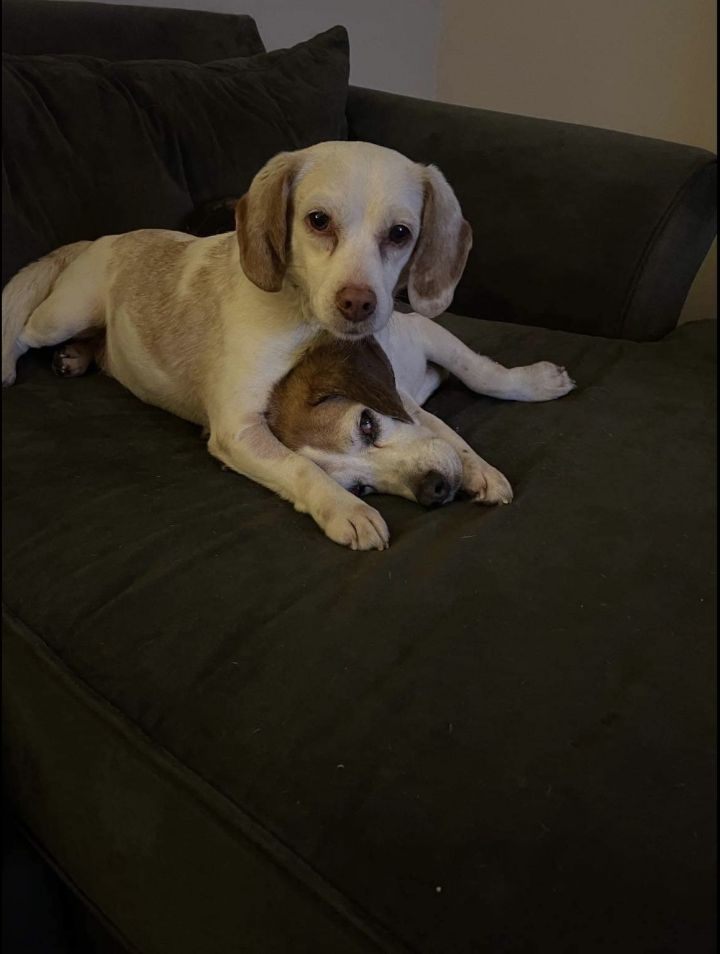 Goldie (bonded to  Buttons) 4