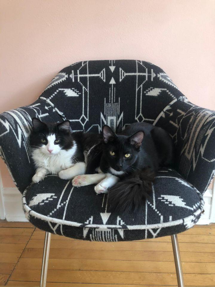 Rosco & Ritchie 4