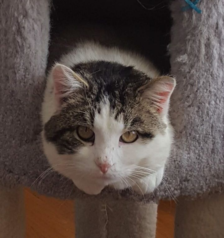 Leonard - Not Currently Accepting New Applications (Waitlist Only) 1