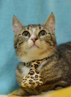 Lyn Ray - 1960/I45 Petsmart Tabby Cat