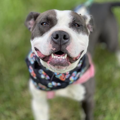 Daisy *Adoption Pending* 2