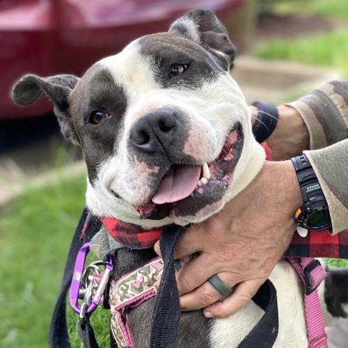 Daisy *Adoption Pending* 3