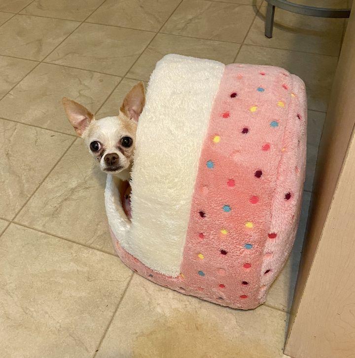 Cookie Crumb- Adoption fee $25 Bissel Pet Promotion 2
