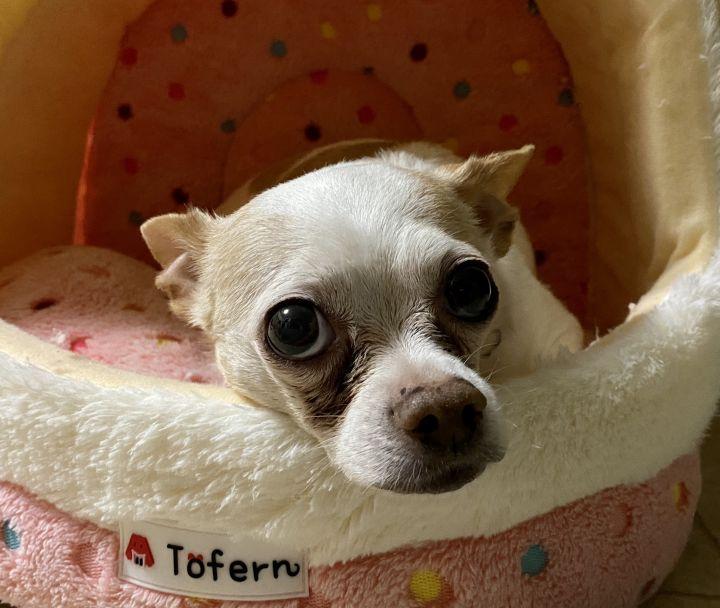 Cookie Crumb- Adoption fee $25 Bissel Pet Promotion 4