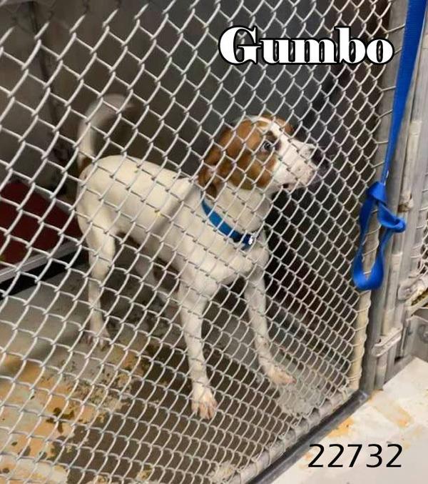Gumbo 1