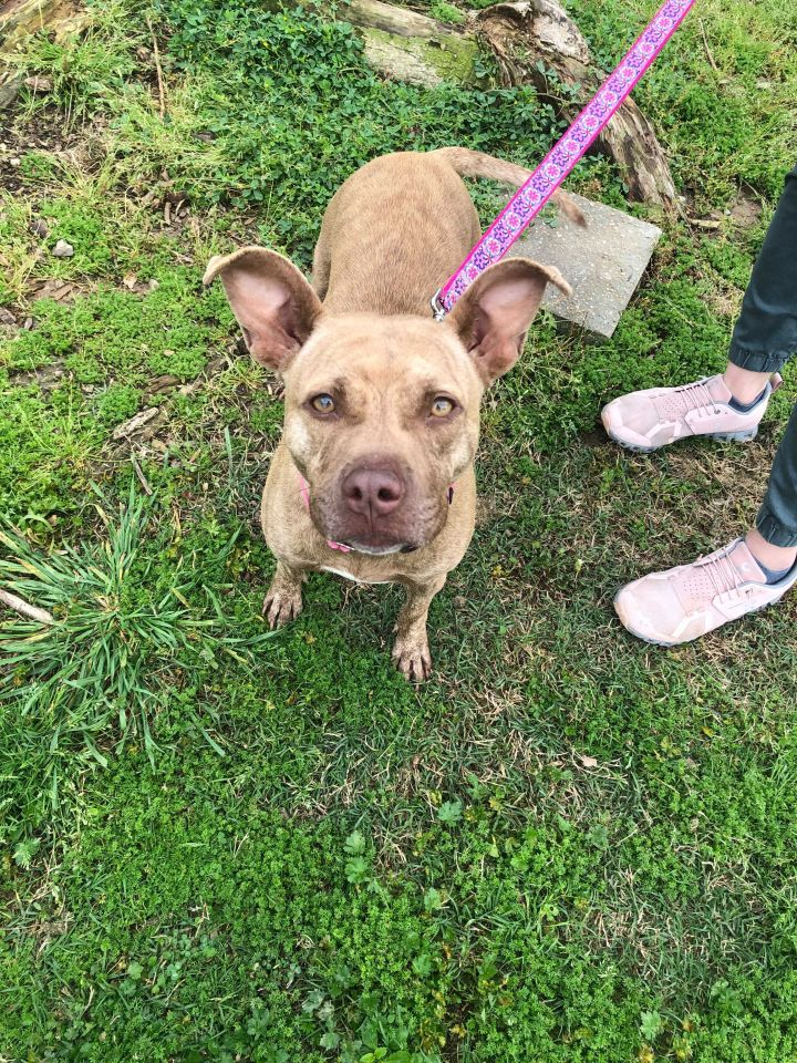 Padme, an adoptable Terrier Mix in Carencro, LA