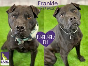 Frankie is enjoying some time in Foster Care If you are interested in meeting this kiddo please e-