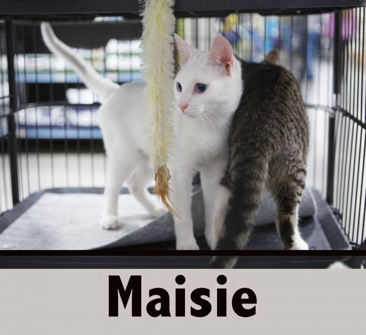 MARKI & MAISIE 3
