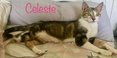 CELESTE 1