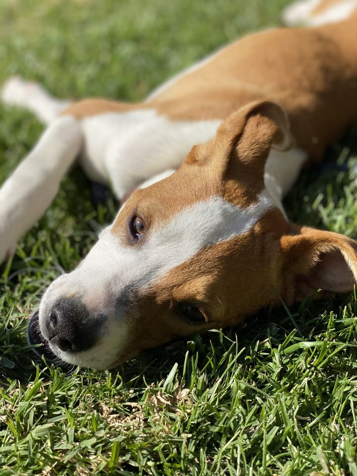 Camile, an adopted Terrier Mix in San Diego, CA_image-4