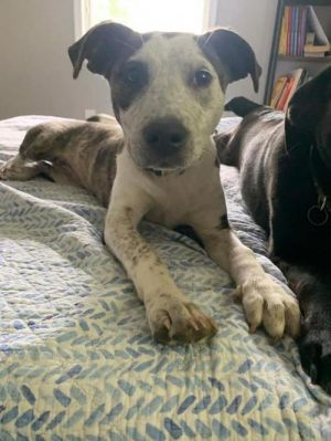 You can fill out an adoption application online on our official website Lucy TX is a four month o