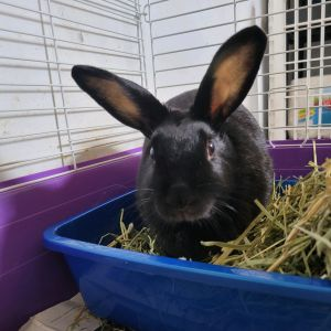 Annalise Bunny Rabbit Rabbit