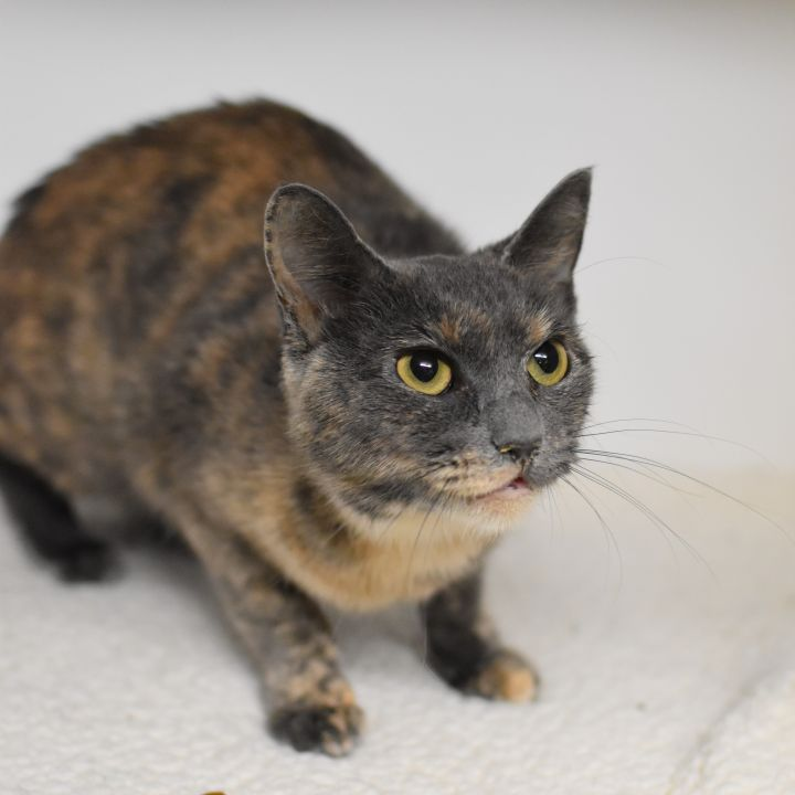 Lily is so lovely!  LOVER ALERT - THERAPY cat 2